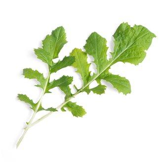 Namenia ricarica Lingot per orto Véritable